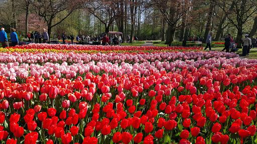 Kembara Musim Bunga Eropah : Day 3 Keukenhof Garden Holland